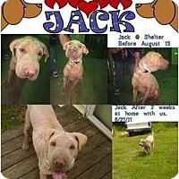 Adopt A Pet :: Jack - Seneca, SC