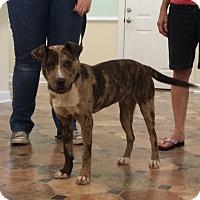 Adopt A Pet :: DAKOTA - Wilmington, NC