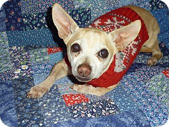 Chihuahua Mix Dog for adoption in Los Angeles, California - Joe - 8 lbs!