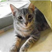 Adopt A Pet :: Dini - Garland, TX