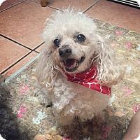 Adopt A Pet :: Rusty - Davie, FL