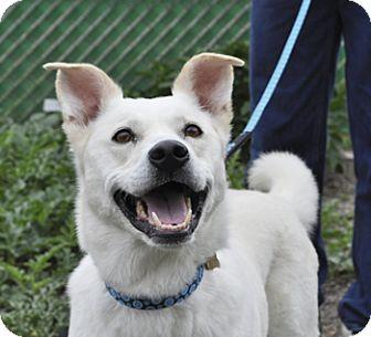 Labrador Retriever Mix Dog for adoption in Woodburn, Oregon - Allie
