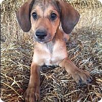 Adopt A Pet :: Bennett - Bedminster, NJ
