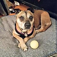 Adopt A Pet :: Georgie - Spring Lake, NJ