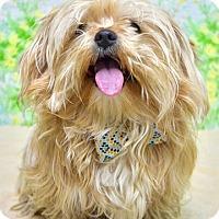 Adopt A Pet :: Harvey - Dublin, CA