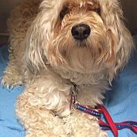 Adopt A Pet :: Sam - Oak Ridge, NJ