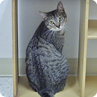 Adopt A Pet :: America - Chambersburg, PA