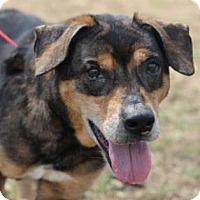 Adopt A Pet :: Cricket - Menands, NY