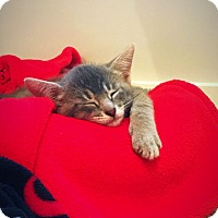 Adopt A Pet :: Stanley - Knoxville, TN