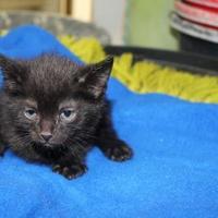 Adopt A Pet :: Jude - Robinson, IL