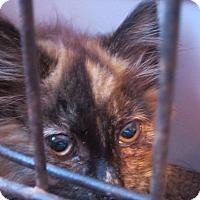 Adopt A Pet :: Boat Basin 4 - Coos Bay, OR