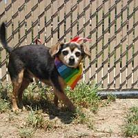 Adopt A Pet :: RASCAL - Norco, CA