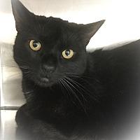 Adopt A Pet :: Abel - Webster, MA