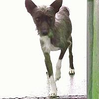 Adopt A Pet :: Hop Sing - Sweetwater, TN