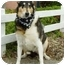 Photo 1 - Collie Dog for adoption in Redwood City, California - Chantilly