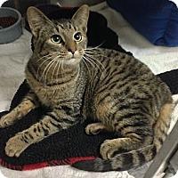 Adopt A Pet :: Antonio - Fairfield, CT