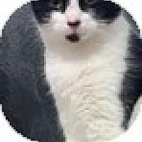 Adopt A Pet :: Tux - Vancouver, BC