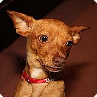 Adopt A Pet :: PENNY - Bryan, TX