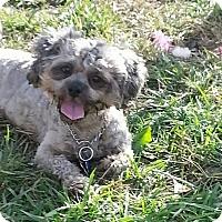 Adopt A Pet :: Autumn - Tinton Falls, NJ