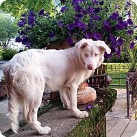 Adopt A Pet :: FINN - DEAF pending adoption - Post Falls, ID