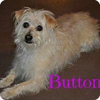 Adopt A Pet :: Buttons (Courtesy Listing) - Scottsdale, AZ