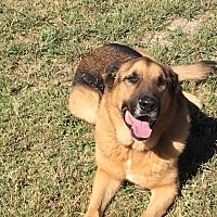 Adopt A Pet :: Oscar-Referral - Dripping Springs, TX