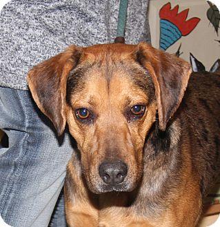Hound (Unknown Type)/Catahoula Leopard Dog Mix Dog for adoption in Marietta, Ohio - Barkley (Neutered)
