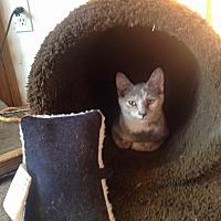 Adopt A Pet :: Fiesty - Cameron, NC