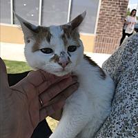 Adopt A Pet :: Nelson - Gainesville, GA