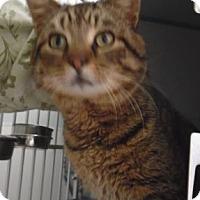 Adopt A Pet :: Derby - Waupaca, WI