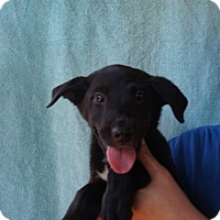 Adopt A Pet :: Pandy - Oviedo, FL