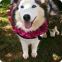 Adopt A Pet :: Kima - Clearwater, FL