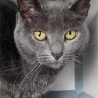Adopt A Pet :: Zoey - Waupaca, WI