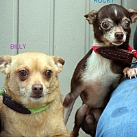 Adopt A Pet :: Billy and Rocky Together  Lower Fee - Locust Fork, AL