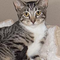 Adopt A Pet :: Ricky - Elmwood Park, NJ