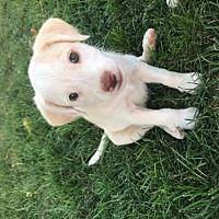 Adopt A Pet :: April - Crestline, CA