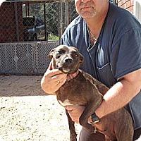 Adopt A Pet :: Paisley - Russellville, AR