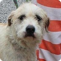 Adopt A Pet :: Sophia - Windham, NH