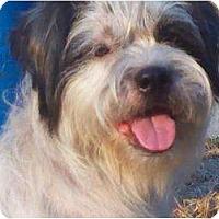 Adopt A Pet :: JELLY BEAN - Houston, TX