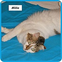 Adopt A Pet :: Millie - Miami, FL