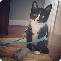 Adopt A Pet :: Mags - Raleigh, NC