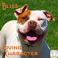Adopt A Pet :: Bliss - Washburn, MO