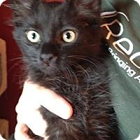 Adopt A Pet :: Apollonia - North Highlands, CA