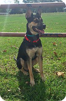 German Shepherd Dog/Shepherd (Unknown Type) Mix Dog for adoption in Houston, Texas - Shep