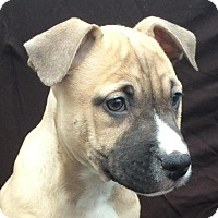 Adopt A Pet :: Grant - East Sparta, OH