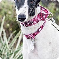 Adopt A Pet :: Southpaw aka PBs Southpaw - Gainesville, FL