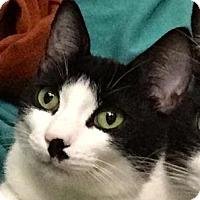 Adopt A Pet :: Cambridge - Palo Alto, CA