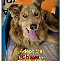 Adopt A Pet :: Chase - Queen Creek, AZ