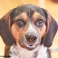 Adopt A Pet :: Frederick - Homewood, AL