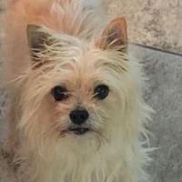Adopt A Pet :: Sammy - Bakersfield, CA